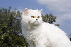 Katze im Land lizenzfreie stockfotografie