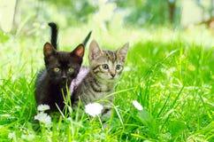 Katze im Park Lizenzfreie Stockfotos