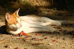 Katze im Park Lizenzfreies Stockbild
