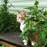 Katze im Profil Stockbild