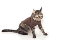 Katze im Pullover stockfotografie