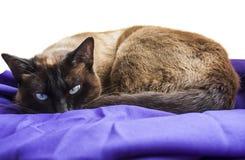 Katze im Rest stockfoto