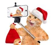 Katze im roten Weihnachtshut, der ein selfie zusammen mit einem Smartphone nimmt Lizenzfreies Stockfoto