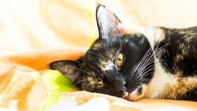 Katze im Ruhezustand Stockfotos