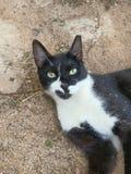 Katze im Sandbad Stockfotografie