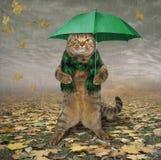 Katze im Schal mit Regenschirm lizenzfreie abbildung