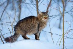Katze im Schnee Lizenzfreies Stockfoto