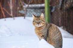 Katze im Schnee Stockbilder