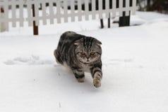 Katze im Schnee Lizenzfreie Stockfotos