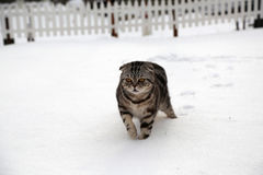 Katze im Schnee Stockfotos