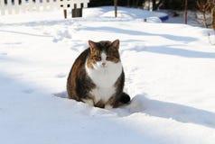 Katze im Schnee Stockfotografie