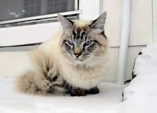 Katze im Schnee an der Tür eines Hauses Stockbilder