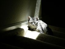 Katze im Sonnenlicht Stockfotos