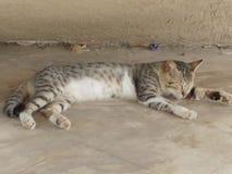 Katze im tiefen Schlaf stockfotos