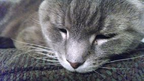 Katze im tiefen Schlaf Lizenzfreies Stockfoto