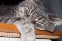 Katze im tiefen Schlaf Lizenzfreies Stockbild