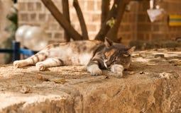 Katze im tiefen Schlaf Stockbilder