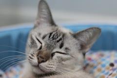 Katze im tiefen Schlaf Stockfoto