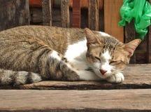 Katze im tiefen Schlaf Lizenzfreie Stockfotos