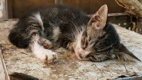 Katze im tiefen Schlaf Lizenzfreie Stockbilder