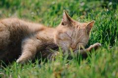 Katze im tiefen Schlaf E Stockfotos
