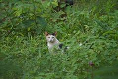 Katze im Wald Stockbilder