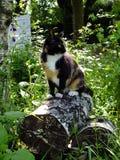 Katze im Wald Lizenzfreie Stockfotos
