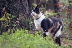 Katze im Wald Lizenzfreie Stockbilder