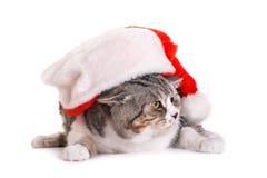 Katze im Weihnachtsmann-Kopfschmuck Lizenzfreies Stockfoto