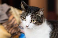 Katze Innen zu Hause haustier Lizenzfreie Stockbilder