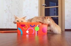 Katze innerhalb eines Kastens Lizenzfreie Stockfotos
