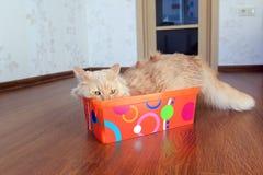 Katze innerhalb eines Kastens Stockfotografie