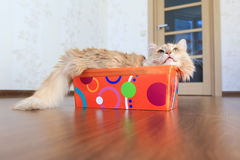 Katze innerhalb eines Kastens Stockbild