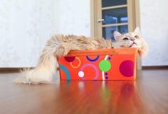 Katze innerhalb eines Kastens Stockfoto