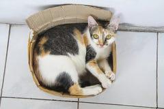 Katze innerhalb eines Kastens Lizenzfreies Stockfoto