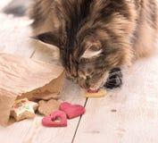 Katze isst auf dem Tisch Stockfotos
