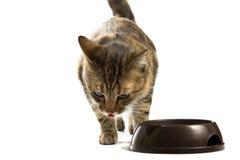 Katze zieht von einer Schüssel ein Stockfoto