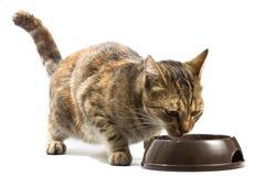 Katze zieht von einer Schüssel ein Stockbilder