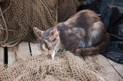 Katze isst die Fische auf dem Fischernetz Lizenzfreie Stockfotografie