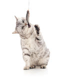Katze isst Fische Lizenzfreie Stockbilder