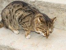 Katze isst frische Fische Lizenzfreie Stockfotografie