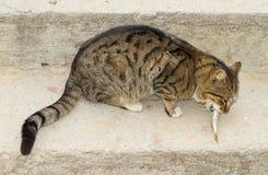 Katze isst frische Fische Stockfotografie