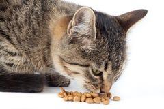 Katze isst trockenes Katzenfutter Lizenzfreie Stockbilder