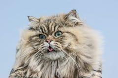Katze ist auf dem Himmelhintergrund Lizenzfreie Stockbilder