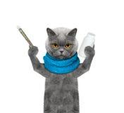 Katze ist krank -- die Temperatur ist hoch Lizenzfreies Stockbild