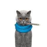 Katze ist krank und misst die Temperatur Stockfotografie