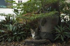 Katze ist Rest unter Baum stockfotos