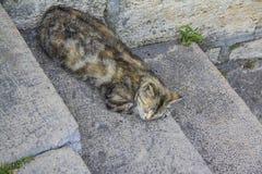 Katze ist Schlaf auf der Treppe Lizenzfreies Stockfoto