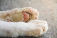 Katze ist Tatzen stockbild