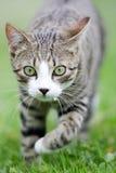 Katze jagt Stockbild